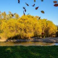 Осень, золотые листопады :: Константин Шабалин