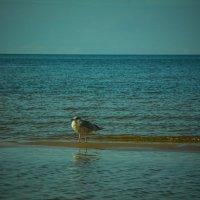 Одиночество :: Raman Stepanov