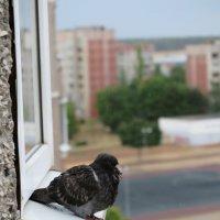 Не все любят дождь... :: Оксана Кошелева