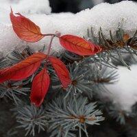 Зима и осень в дружеских объятиях... :: Екатерина Торганская
