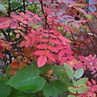 Осенние краски :: Елена Семигина