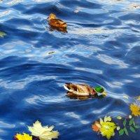 Октябрьский солнечный день на Волге :: Светлана Соколова
