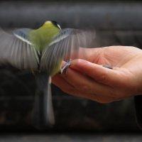 Птицы осенью становятся доверчевей :: Ната Волга
