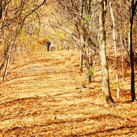 Золотая осень :: Андрей Ситников