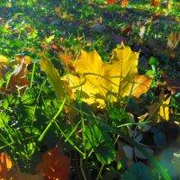 Золотая осенняя пора :: Gerchiana