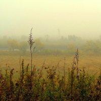 Осенний туман :: Милла Корн