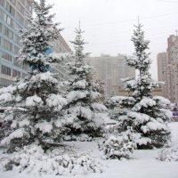Генеральная репетиция Нового года :: Татьяна Ким