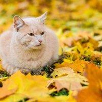 Кошка :: Марина Романова