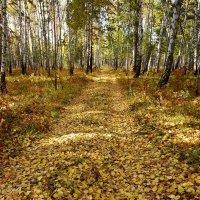 В осень уводит дорога. :: nadyasilyuk Вознюк