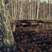 глаза... ты смотришь на природу и природа смотрит на тебя... :: Сергей Бойцов