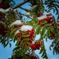Встреча Осени с Зимой :: Нина