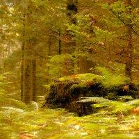 Сказочный лес :: Наталья Рыжкова