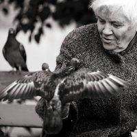 Расскажите, птицы... :: Александр Воронов