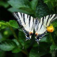 Красавица из Абхазии :: Ирина Никифорова