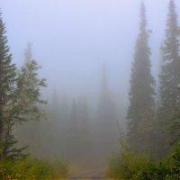 Уходим в туман :: Сергей Чиняев