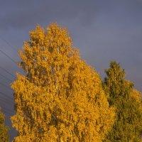 Березы Осень :: Evgenii Larin