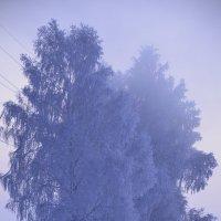 Березы зима :: Evgenii Larin