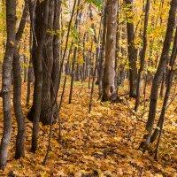 В осеннем лесу.. :: Владимир Сквирский