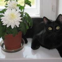 Бася и цветок :: Татьяна