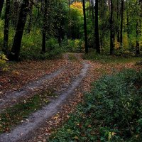 Тропа  к золотому дереву.... :: Валерия  Полещикова