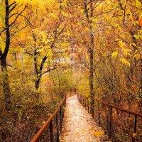 Осень :: Альбина Васильева