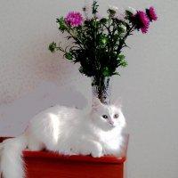 Кошка и букет :: Владимир Ростовский