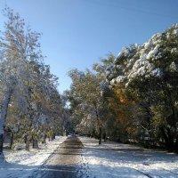 Осень всё проспала, а зима не дремлет :: Олег Отт
