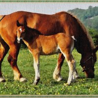 Рисую лошадей :: Лидия (naum.lidiya)
