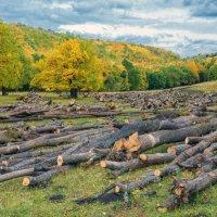 Лесозаготовка :: Любовь Потеряхина