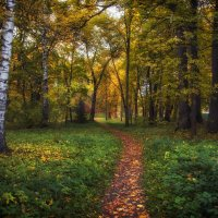 Осенний лес :: Елена Чижова