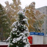 Туя - свеча из первого снега. :: Наталья Золотых-Сибирская