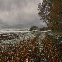 Снежная проседь на жёлтой листве :: Сергей Жуков