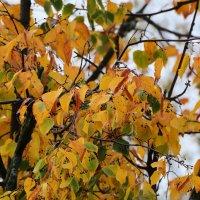 Краски Осени. :: Paparazzi