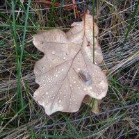 октябрь в лесу :: tgtyjdrf