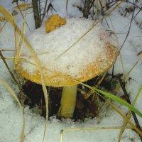 снег выпал неожиданно... :: Татьяна