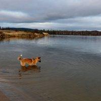 Осеннее купание :: Ольга