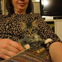 Котёнок на коленях :: Сербина Анна