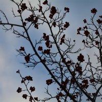 Ягоды рябины осенью :: Сербина Анна