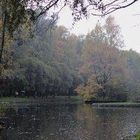 В Сокольниках :: Наталья Нарсеева