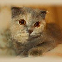 Знаешь, кошка твоя скучает... Очень тихо и про себя... :: Людмила Богданова (Скачко)