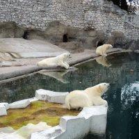 Три медведя :: Елена Ом