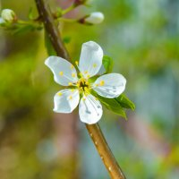 цветок белее белого :: Света Кондрашова