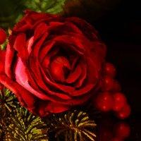 Осенняя роза :: Татьяна Евдокимова