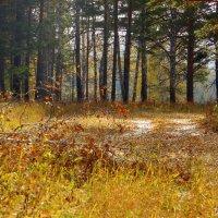 В лесу осеннем. :: nadyasilyuk Вознюк