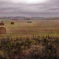 Поздняя осень. Грачи улетели, Лес обнажился, поля опустели.(Н. Некрасов) :: Алла ************