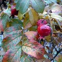 Красивая осень! :: Вера Щукина