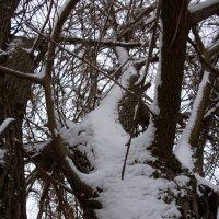 Ствол в снегу :: Oleg Arince
