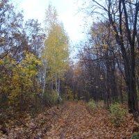 В лесу :: марина ковшова