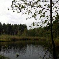 лесное озеро :: Елена Иванкина