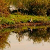 Аист и ворона на том берегу :: Александр Прокудин